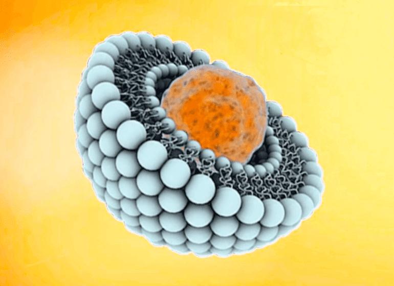 La vitamine C liposomale